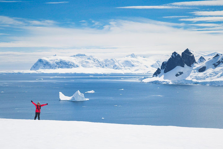 Red penguin in AntarcticaDanco Island, Antarctica
